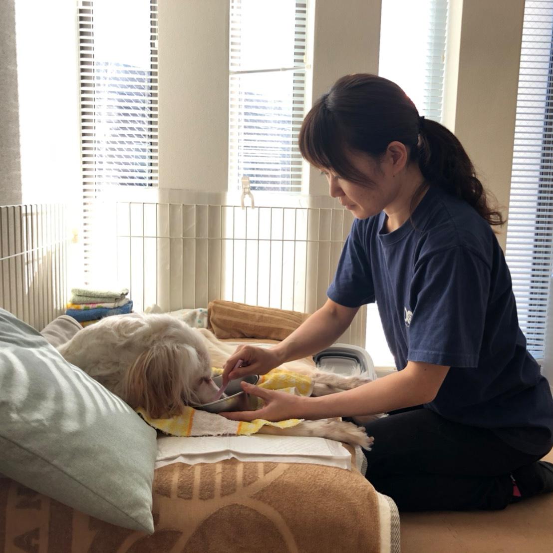 老犬介護・高齢犬サポート
